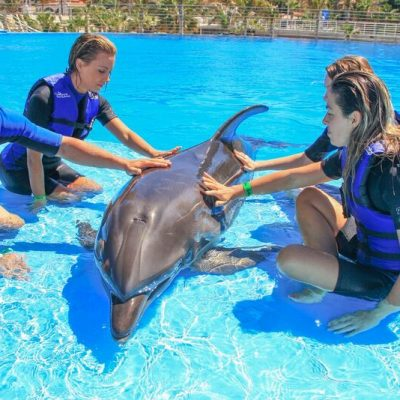 DOLPHIN ENCOUNTER_9