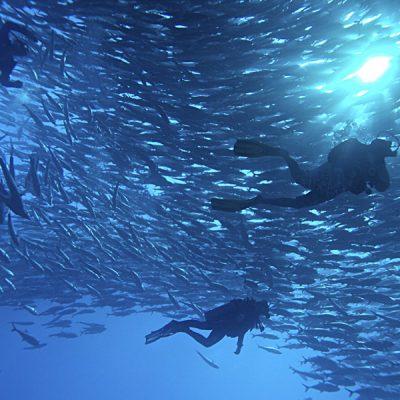 scuba-diving-cabo-pulmo1-1